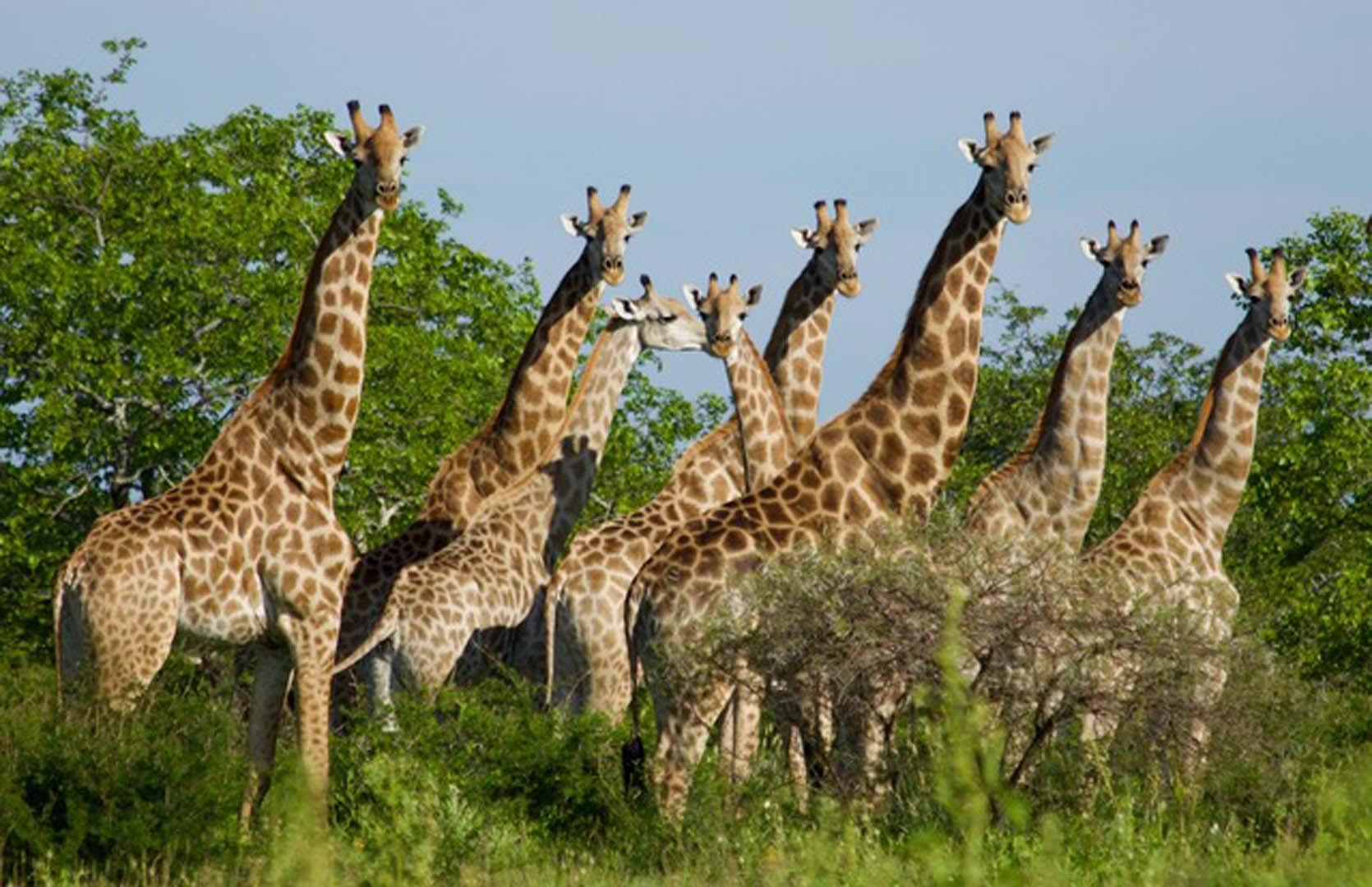 Mazunga Safaris, Bubye Valley, Bubye Conservancy