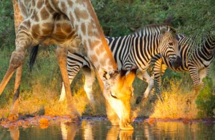 Bubye Conservancy, Mazunga Safaris