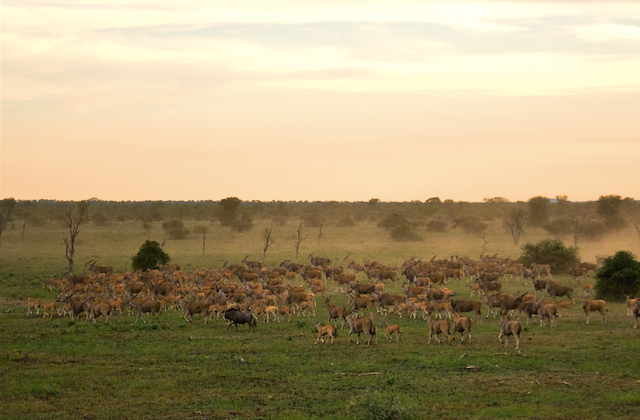 Bubye Conservancy, Mazunga Safaris